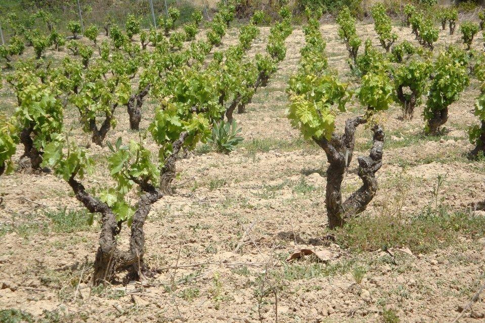 Rioja Alavesa, un paseo por sus paisajes